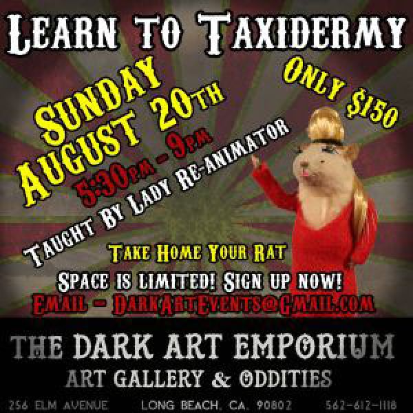 Learn-to-taxidermy