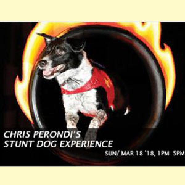 Stunt-dog-experience-2018
